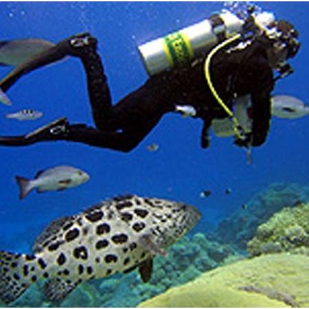 Divers Discount Florida - PADI Nitrox Specialty Certification ...
